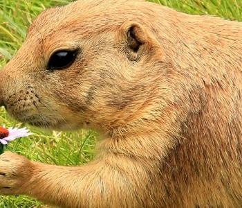 Operation Prairie Dog